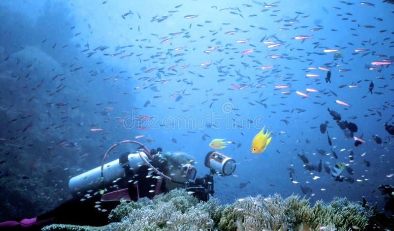 Tempestade dos peixes de Beqa fotografia de stock royalty free