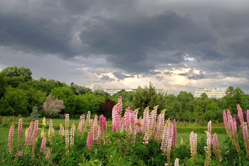 A tempestade está vindo! fotografia de stock royalty free