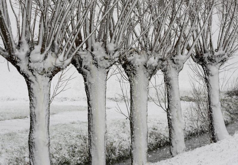 Tempestade Noordeloos da neve do inverno dos salgueiros fotos de stock royalty free
