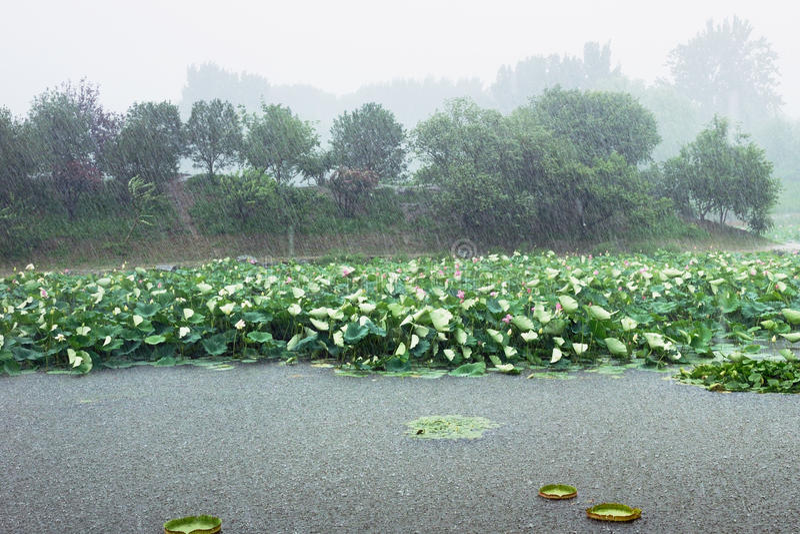 Tempestade que rainning fotografia de stock