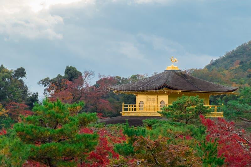 Tempio di Kinkakuji fra la foresta dell'acero in autunno fotografie stock