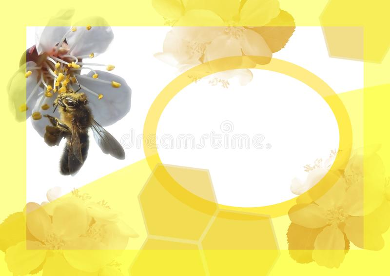 A template of the abstract invitation card with flowers and a bee stock photography