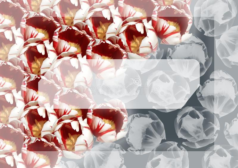 A template of the abstract invitation card with tulips royalty free stock images