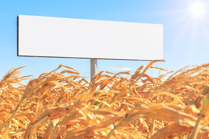 Template as white empty rectangular form billboard on a yellow corn field and on the background of blue sky and sun royalty free stock image