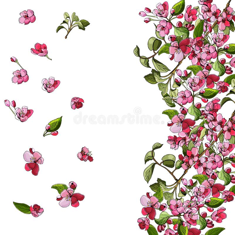 Template or background of blossoming pink branch of apple tree and flowers. Hand drawn colored sketch of malus flowers. vector illustration