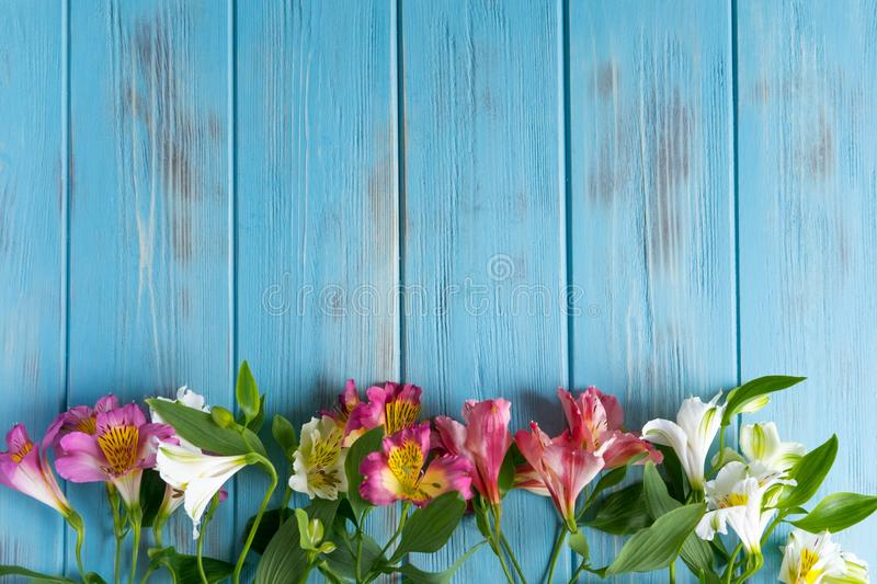 Template birthday greeting card. Blue wooden background with pink flowers of alstroemeria. The basis for the congratulatory banner stock photos