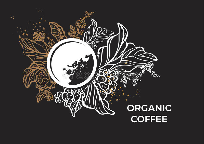 Template of branch of coffee tree, leaves, flowers and beans. Vector royalty free illustration