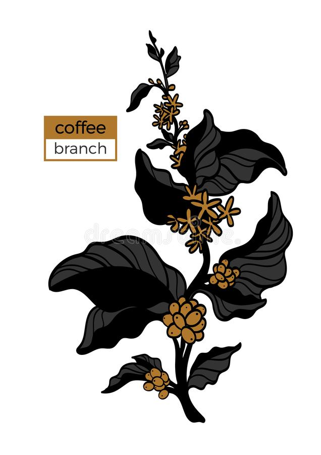 Template of color branch of coffee tree with leaves, flower and natural coffee beans. Vector illustration stock illustration