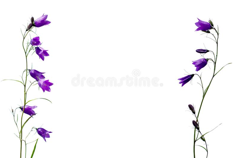 Template pattern of bellflower stock photo