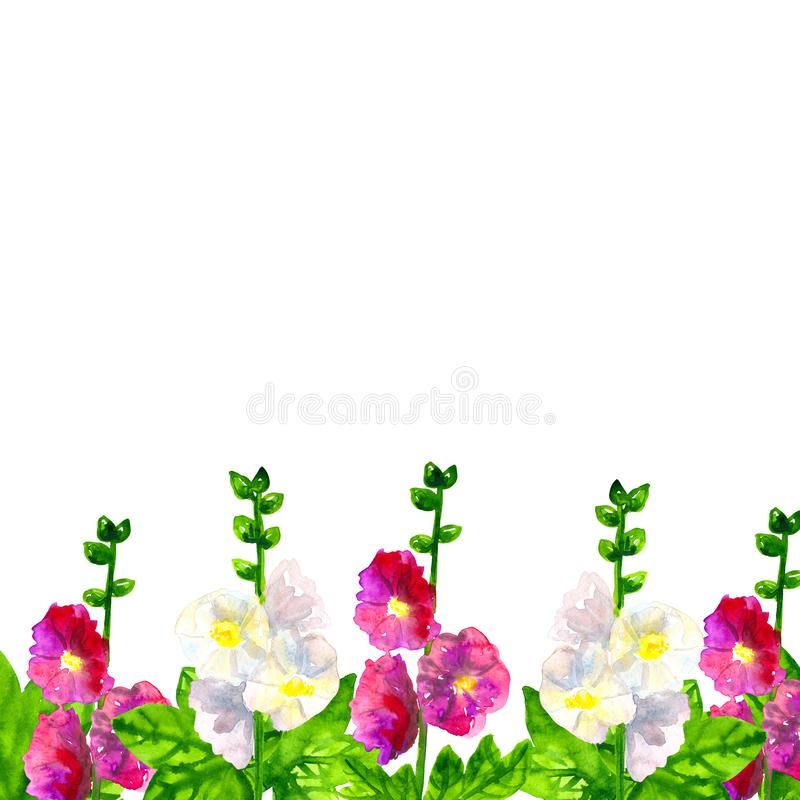 Template. Pink purple mallow with leaves. White mallow. Hand drawn watercolor illustration. Isolated on white background. Pink purple mallow with leaves. White royalty free stock images