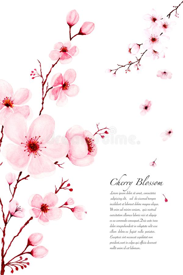 Template watercolor sakura branches hand painted on white background. Template watercolor cherry blossom branches hand painted. Spring or summer decoration royalty free illustration