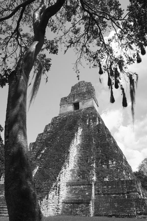 Temple 4 de Tikal image libre de droits
