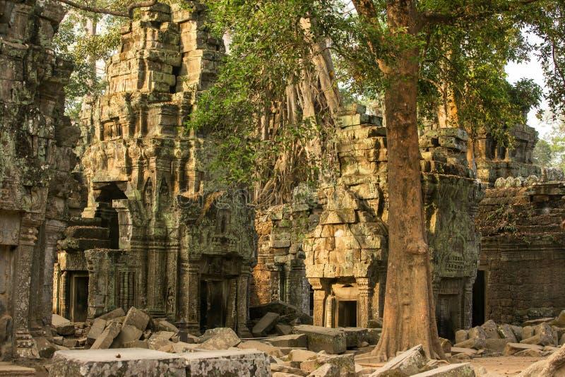Temple antique de Prohm de ventres chez Angkor Vat images libres de droits