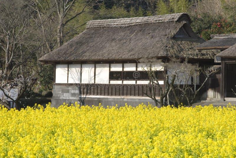 Temple avec les fleurs jaunes photographie stock libre de droits