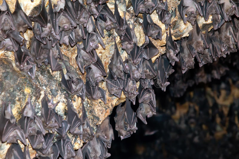 Download In A Temple Of A Bat. Indonesia. Bali Stock Image - Image: 21414711