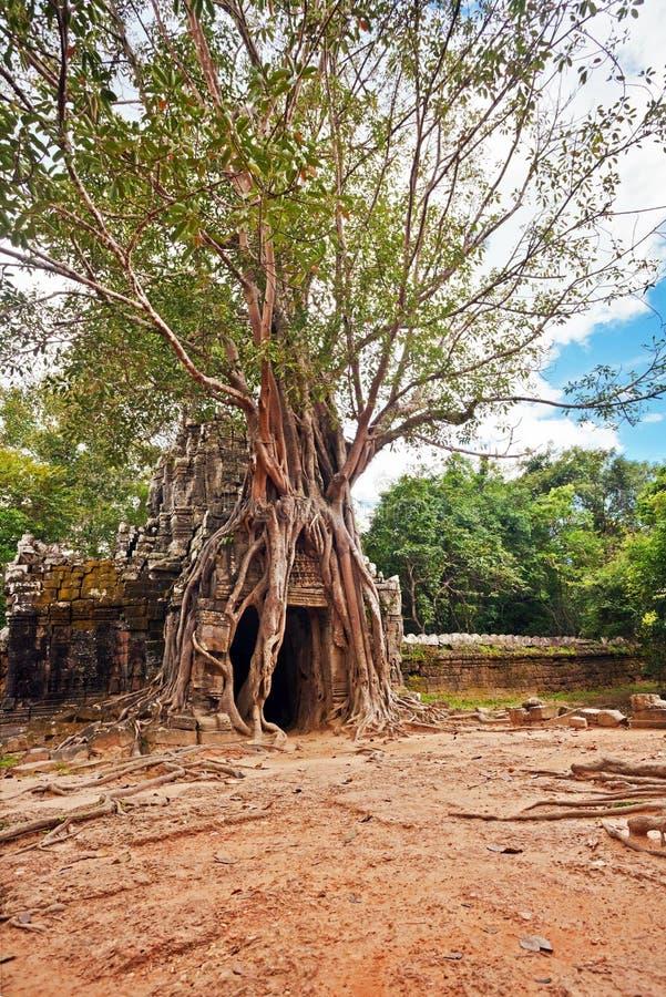 Temple bouddhiste antique de khmer dans le composé d'Angkor Vat photographie stock libre de droits