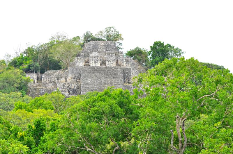 Temple at Calakmul, Campeche, Mexico. The temple at Calakmul surrounded by tropical trees.  Calakmul is an ancient Mayan ruins found in the jungles of the Peten stock images