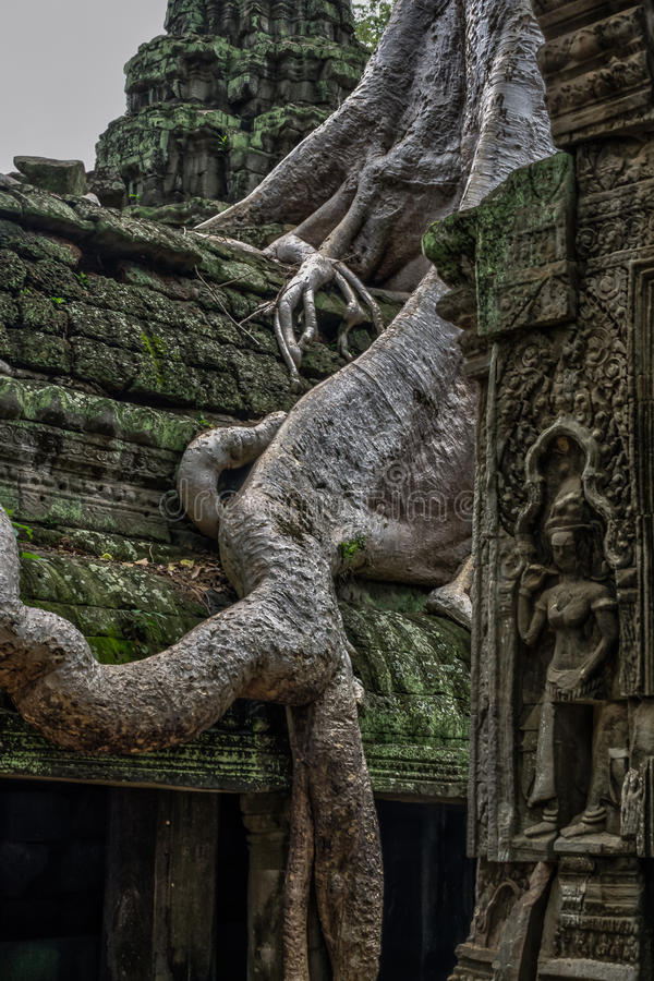Temple in the Cambodian Jungle. The Angkor complex is extensive and inspiring royalty free stock photo