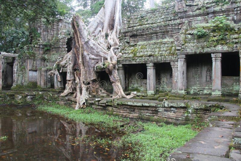 Temple de Preah Khan cambodia Province de Siem Reap Ville de Siem Reap image stock