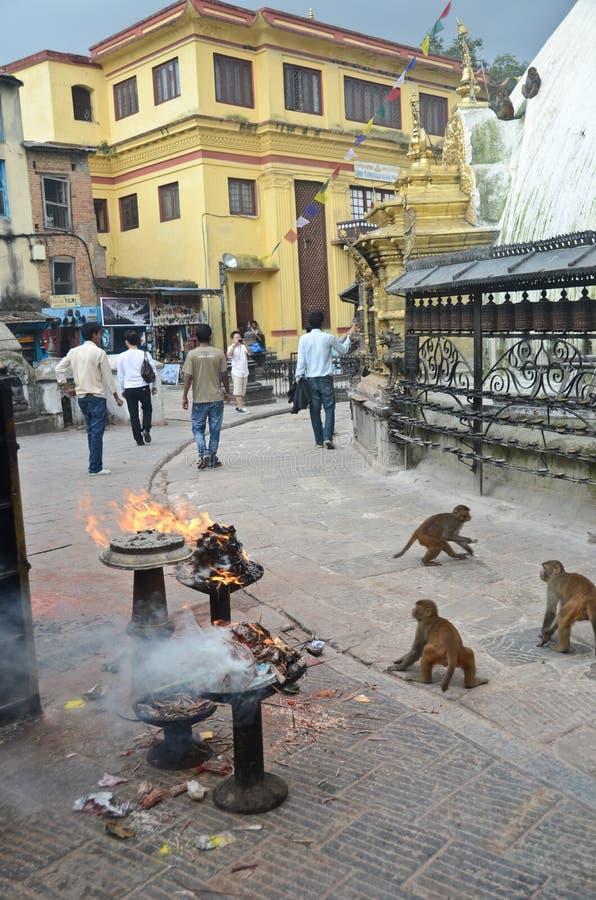 Temple de singe au Népal images libres de droits