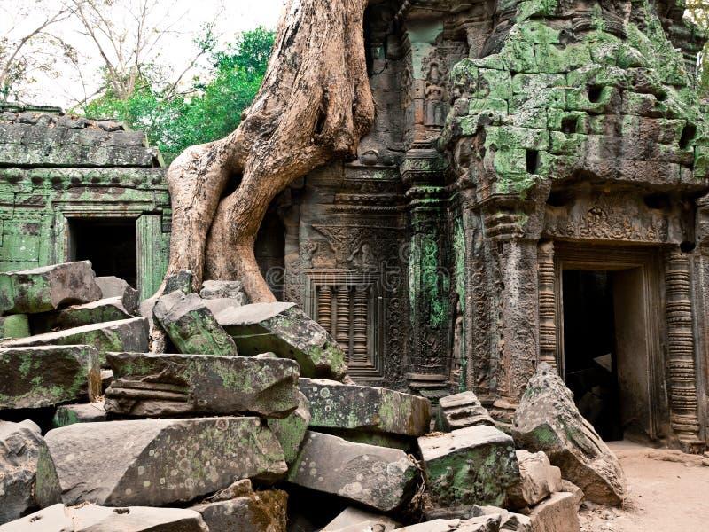 Temple De Ta Prohm, Angkor Wat, Cambodge Image libre de droits