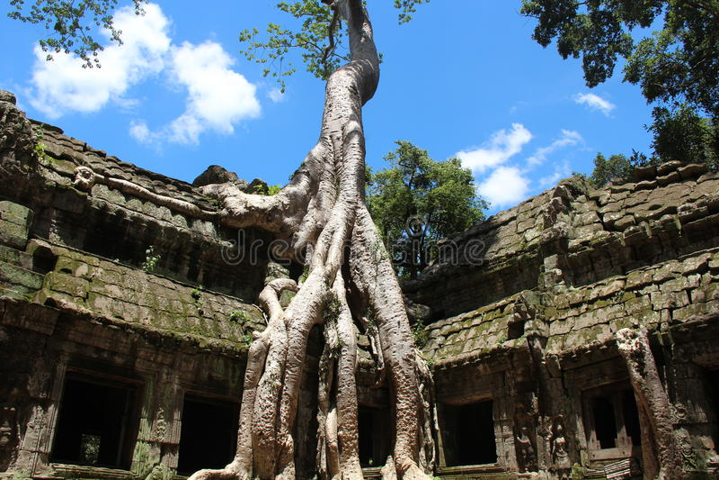 Temple de Ta Prohm cambodia Province de Siem Reap Le Cambodge photographie stock