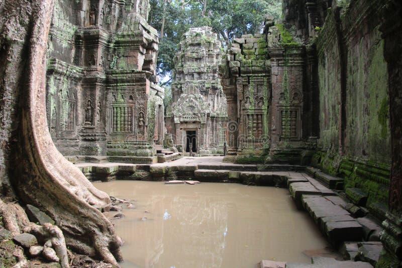 Temple de Ta Prohm cambodia Province de Siem Reap Ville de Siem Reap image libre de droits