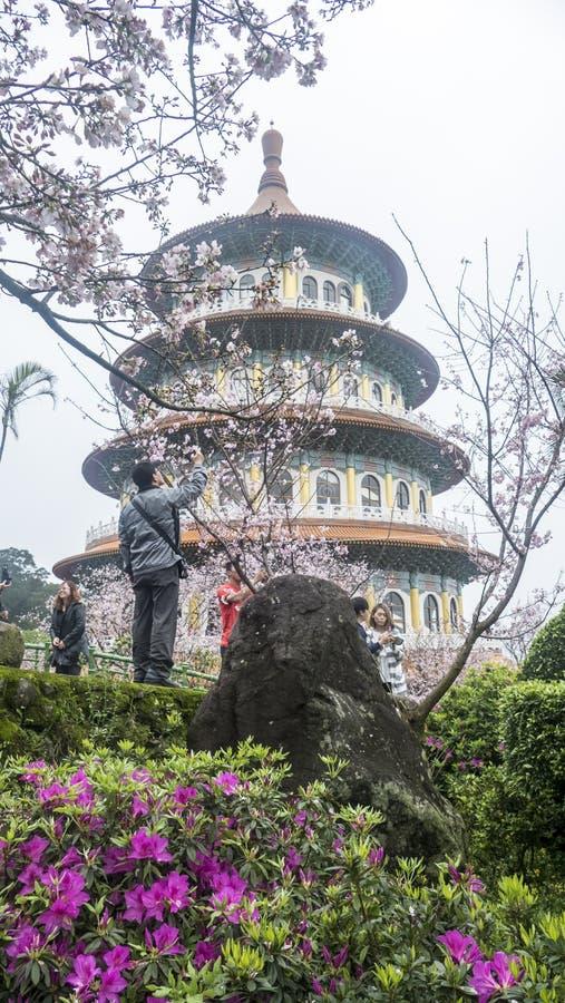 Temple de Tien-yuans avec des fleurs de cerisier à Taïpeh photographie stock libre de droits