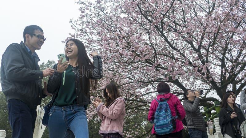 Temple de Tien-yuans avec des fleurs de cerisier à Taïpeh photos stock