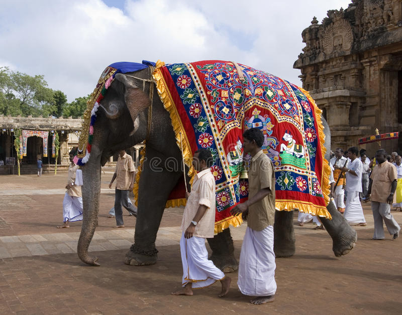 Temple Elephant - Thanjavur - India. Temple Elephant in the Hindu Brihadishvara Temple in Thanjavur in the Tamil Nadu region of Southern India. This is a UNESCO stock images
