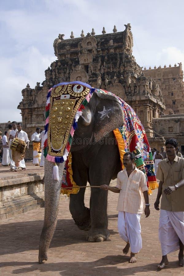 Temple Elephant - Thanjavur - Tamil Nadu - India stock image