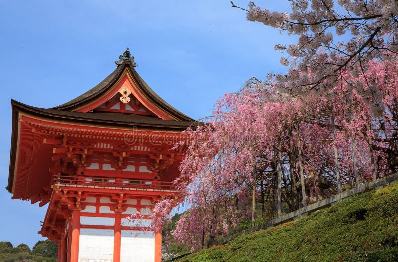 Temple et fleurs de cerisier de Kiyomizu à Kyoto photographie stock