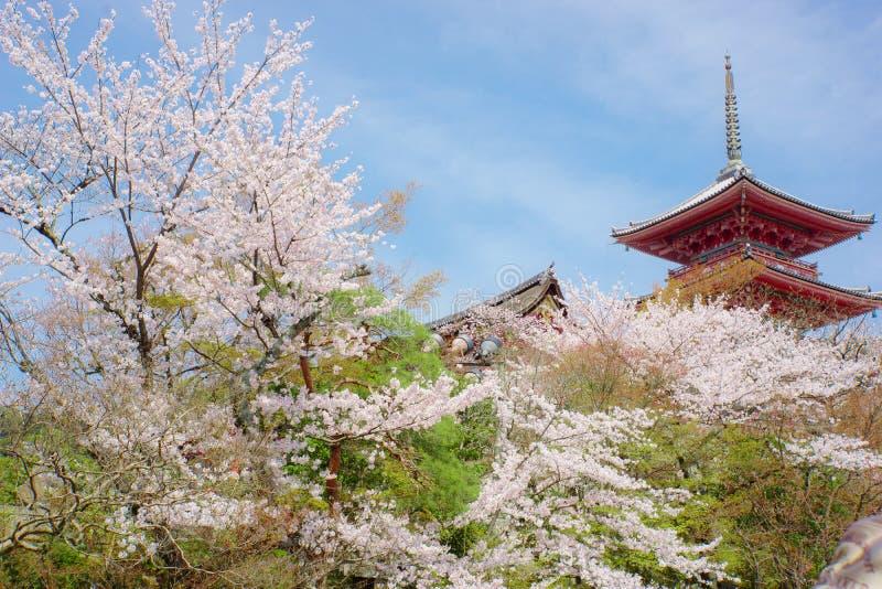 Temple et fleurs de cerisier de Kiyomizu images libres de droits