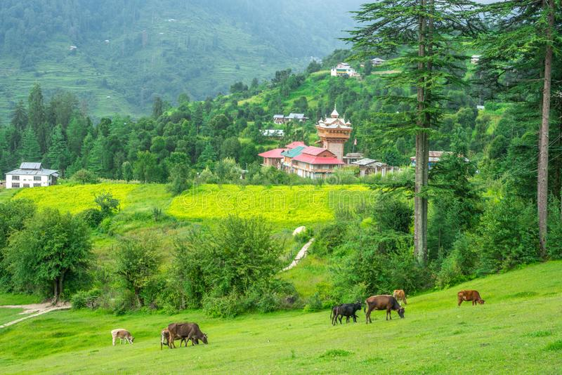 A Temple in Green meadows in himalayas, Great Himalayan National Park, Sainj Valley, Himachal Pradesh, India. Photo of Temple in Green meadows in himalayas stock images