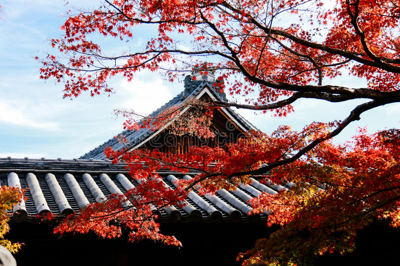 Temple roof with Japanese maple tree in foreground Autumn royalty free stock photography