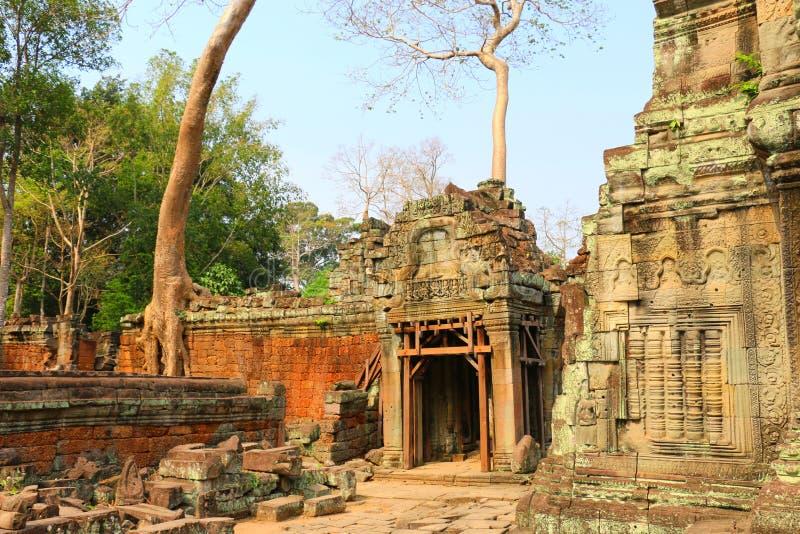 Templet för Ta Prohm i Angkor Wat, träd på templet fördärvar, Cambodi arkivfoto