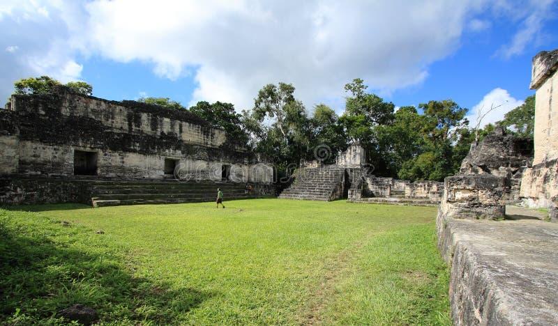 Templet fördärvar i den Tikal nationalparken, Guatemala royaltyfri foto