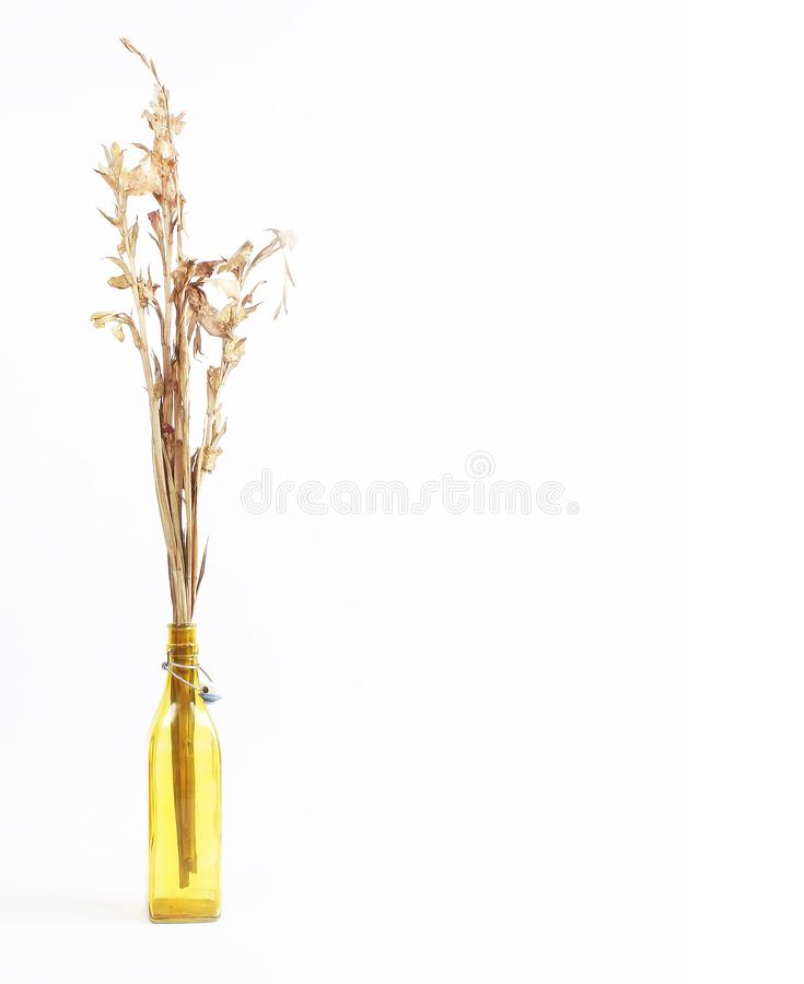 Templete floreale asciutto dello spazio in bianco della decorazione fotografia stock libera da diritti