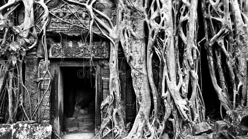 Templo antigo de Ta Phrom imagem de stock royalty free