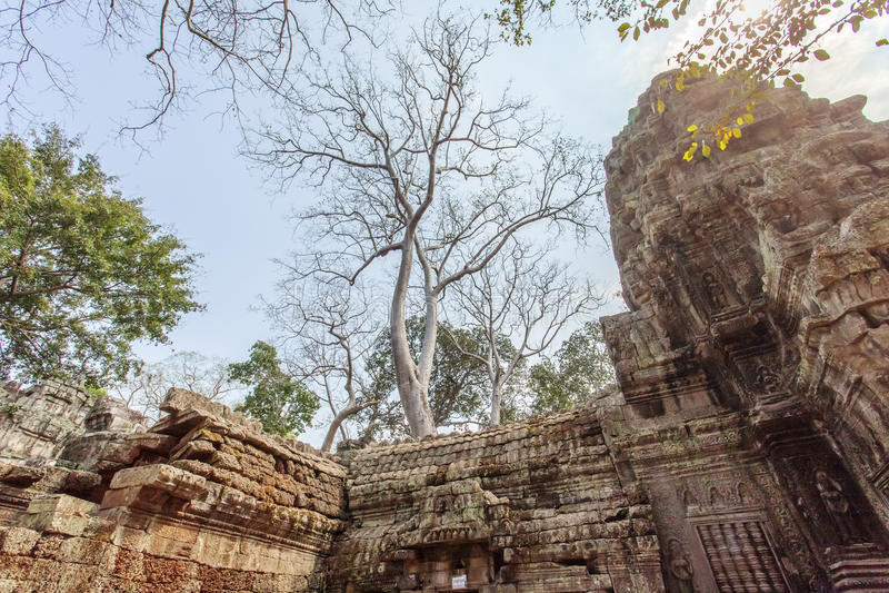Templo antigo de Ta Prohm, Angkor Thom, Siem Reap, Camboja fotos de stock