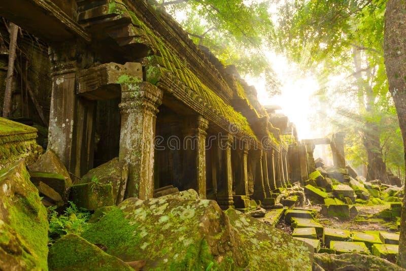 Templo antiguo de TA Prohm, Angkor, Camboya imágenes de archivo libres de regalías