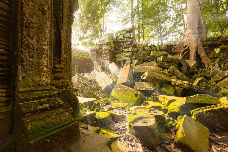 Templo antiguo de TA Prohm, Angkor, Camboya imagen de archivo libre de regalías