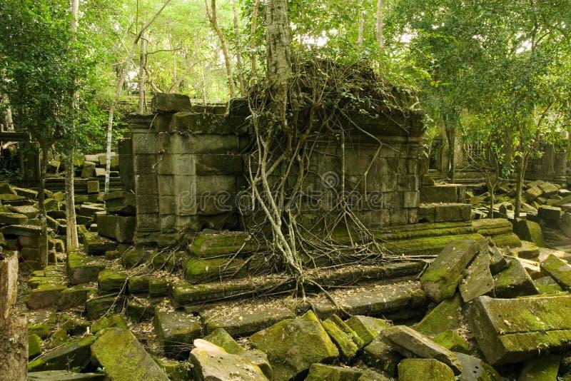 Templo da selva imagem de stock