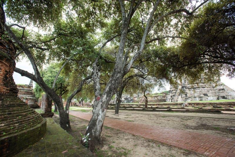 Templo da Tailândia - Antigo pagode em Wat Yai Chai Mongkhon, Parque Histórico de Ayutthaya, Tailândia fotos de stock royalty free