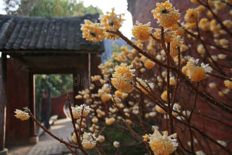 Templo de Danxia en Nanyang fotos de archivo libres de regalías