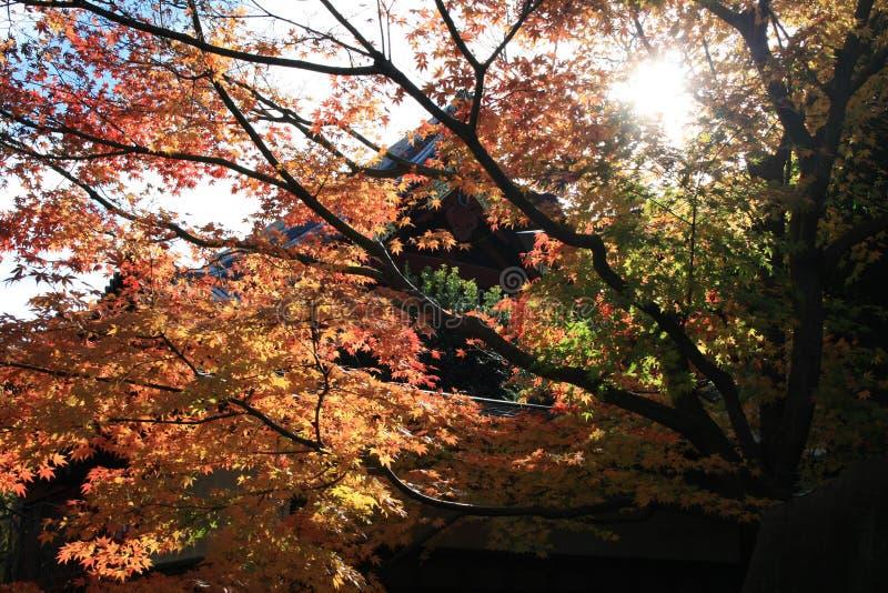 Templo de Japón en otoño fotografía de archivo libre de regalías