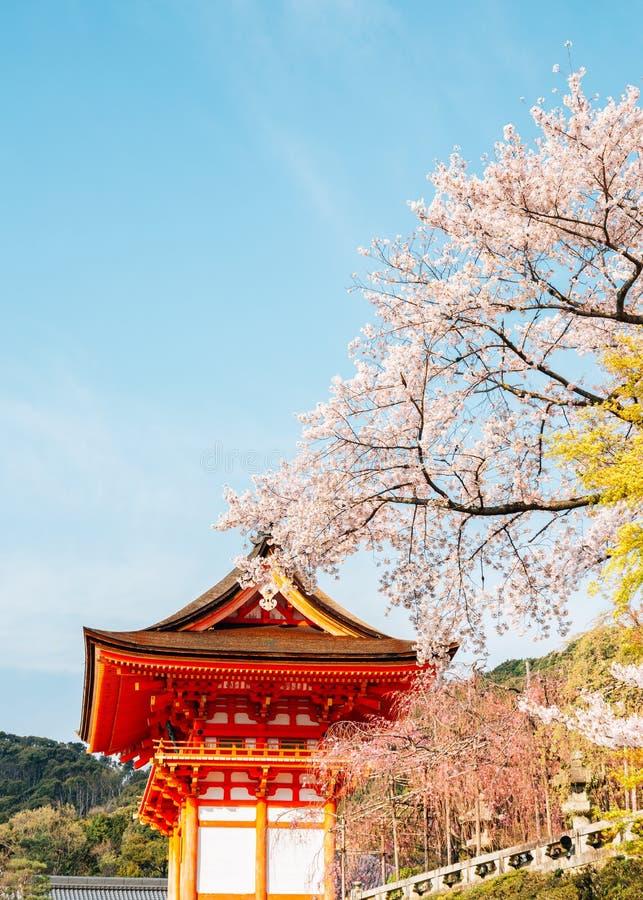 Templo de Kiyomizu-dera com as flores de cerejeira em Kyoto, Japão foto de stock