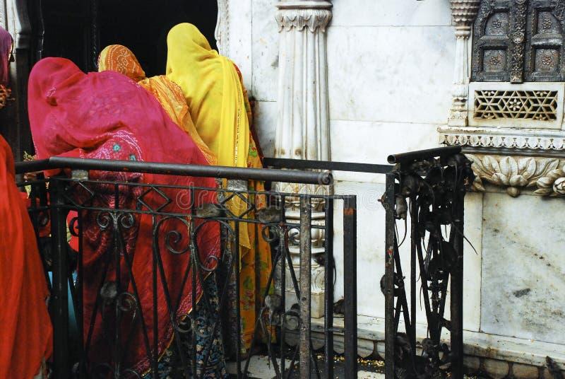 Templo de la rata en Deshnok, la India - mujeres en las saris (Karni Mata Temple imagen de archivo libre de regalías