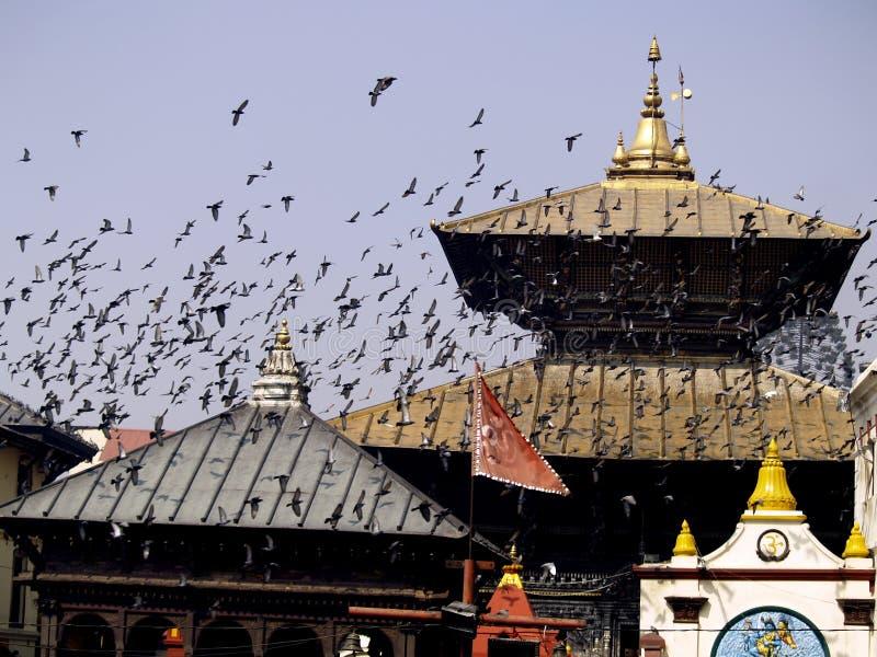 Templo de Pashupatinath fotografía de archivo