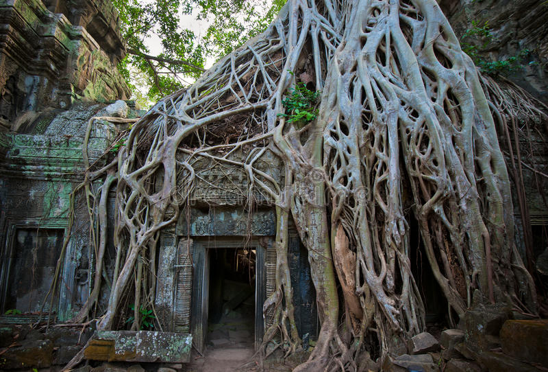 Templo de Ta Prohm, Angkor, Cambodia imagem de stock royalty free